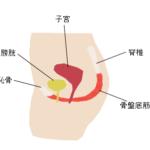 軽い尿漏れは筋トレで改善できる!?骨盤底筋が鍛えられる筋トレ