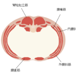 お腹のインナーマッスル「腹横筋」が鍛えられる筋トレ