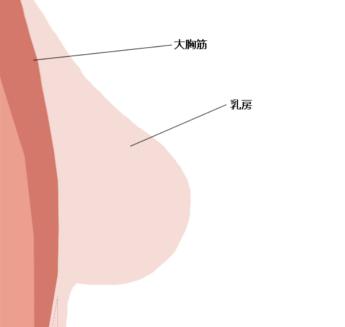 胸と大胸筋の位置