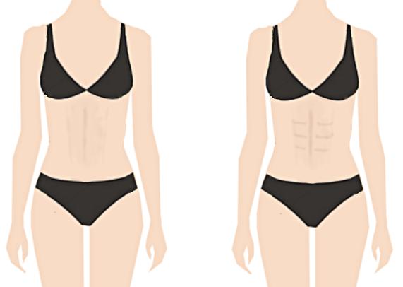 女性の腹筋、縦線、シックスパック