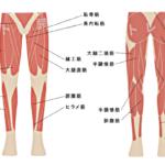 下半身の様々な筋肉を鍛えるための筋トレ