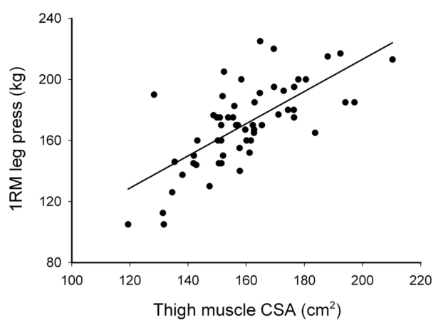 筋断面積と最大筋力の関係