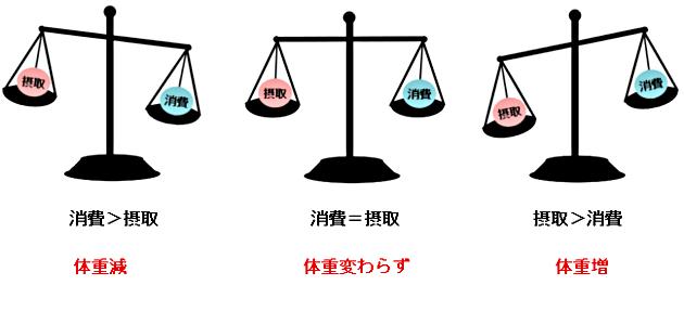 摂取エネルギー、消費エネルギーと体重の関係